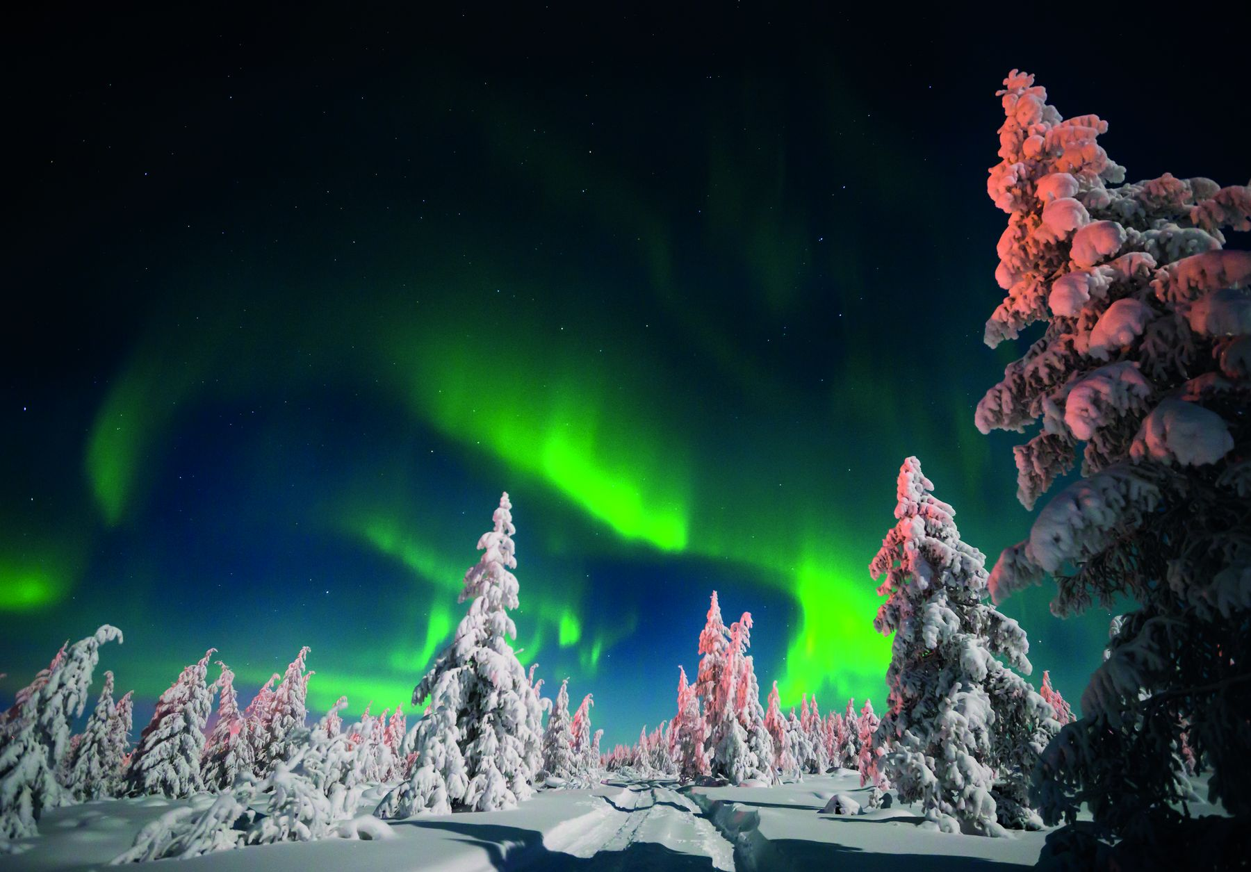 Nordlichter Wald Schnee iStock610946908